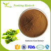 Tonking Supply High Quality Ecklonia Cava Extract