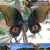 MY Dino-C021 Giant animatronic insect model for sale