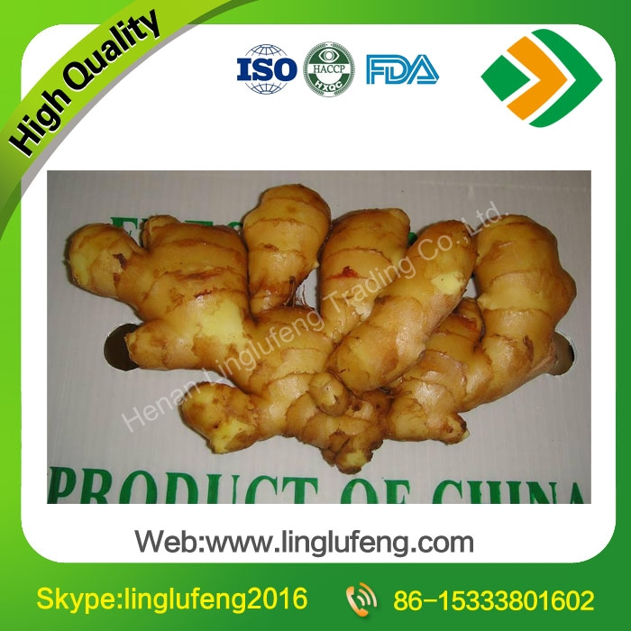 Cheap price new crop spicy mature fresh ginger