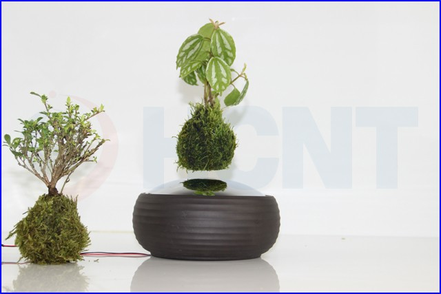 Cheap Designer Decor Air Layering Levitating Plant Bonsai Buy Levitating Bonsai Air Layering Bonsai Air Plant Bonsai Product On Alibaba Com