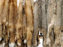 RAW LEATHERS AND FUR