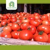 Hot selling farm fresh tomatoes for sale cherry tomatos with high quality