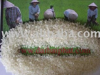 Round Grain rice/ Short Grain rice/ Long White Rice