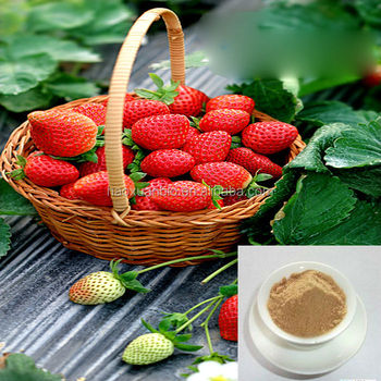Natural and factory supply strawberry extract for sale