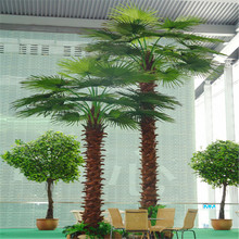 factory specializing in all kinds of palm trees date palm prices large outdoor palm tree