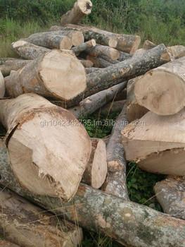 Gmelina Logs/ Beech Wood