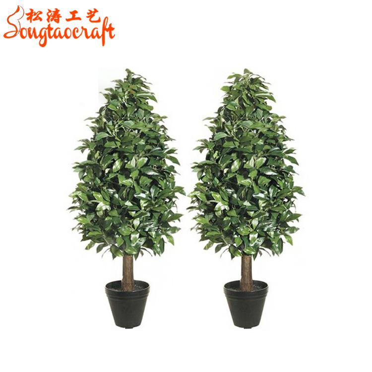 Green Gr Trees Evergreen Plants