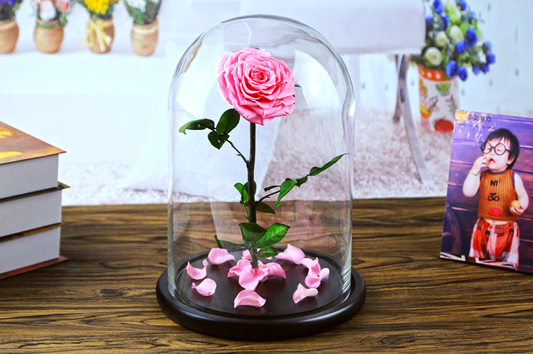 rose-in-glass-dome-cloche