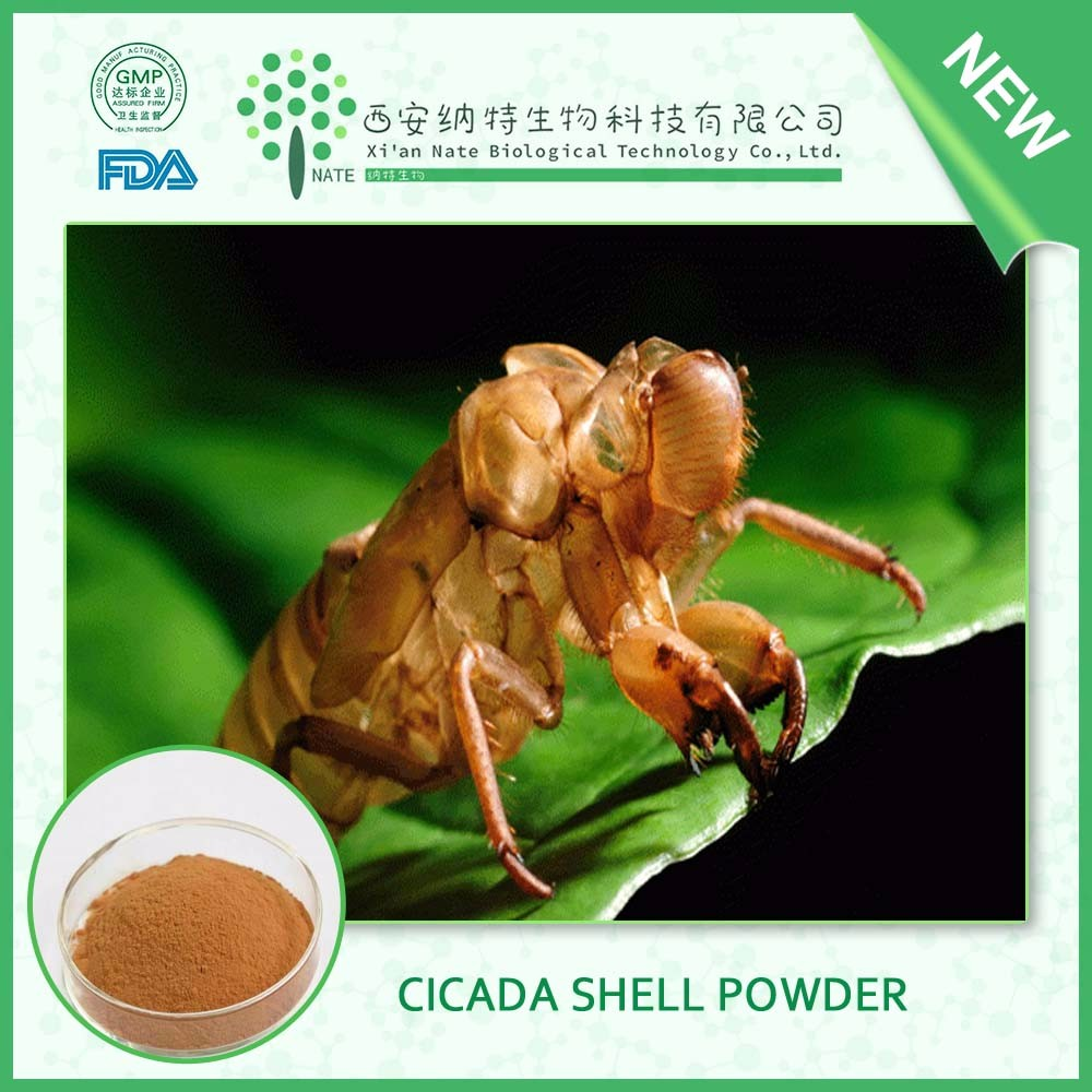 Alibaba Trade Assurance cicada shell Powder free sample in bulk