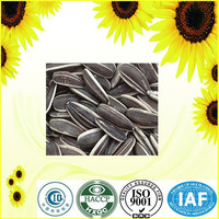 high quality seeds sunflower with free samples