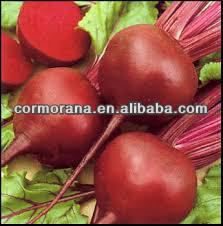 Bulk supply Red beetroot Extract, red beet powder, betanin