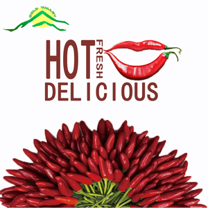 whole sale high quality Dried Red Chaotian Chilli of Sanying new crop Hot Red whole Chilli for Exporting
