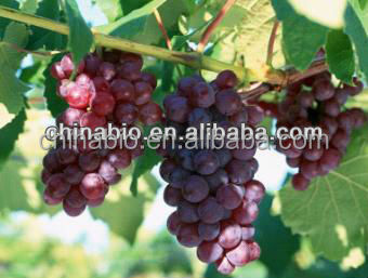 GMP factory supply high quality Grape Seed Extract powder