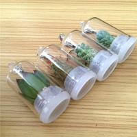 UCHOME free shipping 2019 Mix style pet plant with real cactus
