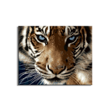anima tiger diy oil painting by numbers