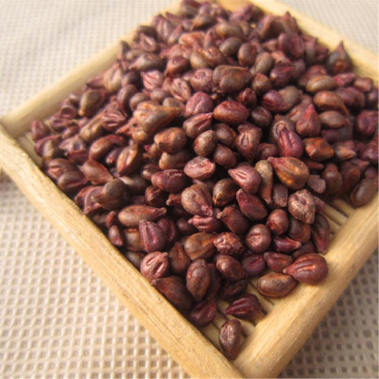 High quality Grape seeds /Vitis vinifera seeds on sales
