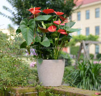 outdoor flower containers ideas for garden