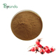 Rosehip/Rose hip extract in bulk stock
