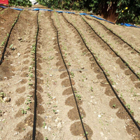 farm Irrigation drip tape/ dripping system for tomato