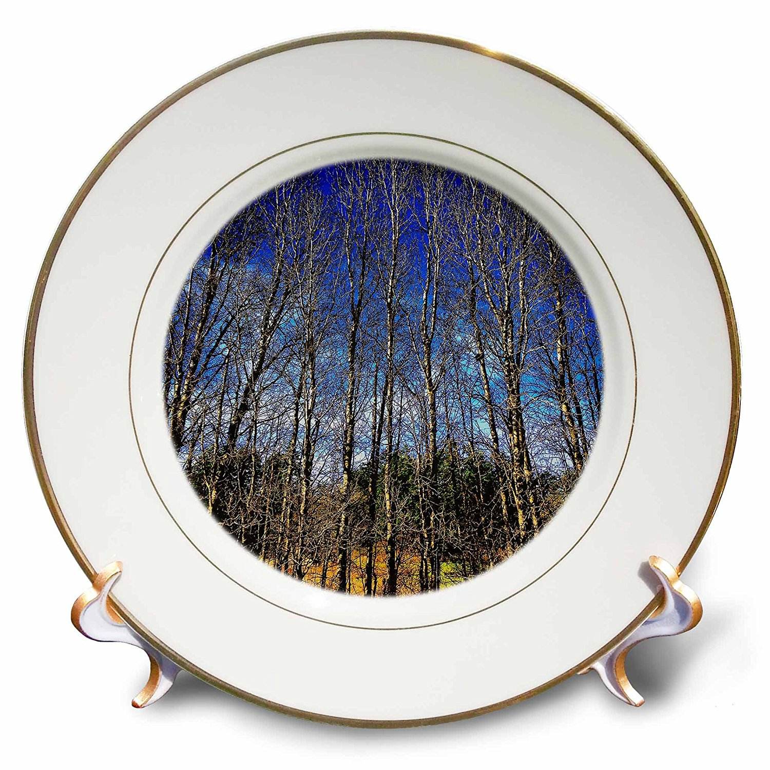 DYLAN SEIBOLD - PHOTOGRAPHY - THIN TREE STAND - 8 inch Porcelain Plate (cp_245711_1)