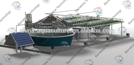 RAS/hydroponics system/Fish farm and hydroponic greenhouse system
