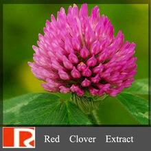 100% nature Red Clover Extract