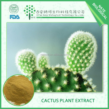 Decrease blood sugar of Cactus Plant Extract made in china