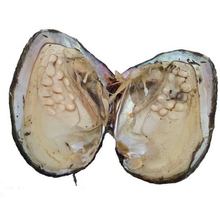 d05b8bbea08f Gemsnorm al por mayor Monsters perlas de ostras 30 perlas dentro natural  madre de perlas Oyster