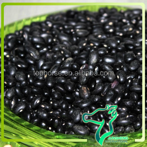 Nature Black Kidney Beans (Black Mapte Bean) Wholesales Best Quality