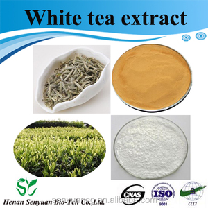 Best selling competive price and high quality pure natural White Tea Extract powder