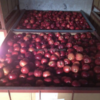 Pome fruit products type red delicious apple available in bulk
