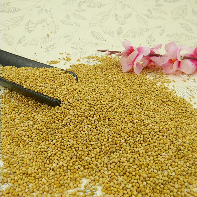 Chinese high quality yellow millet for bird food