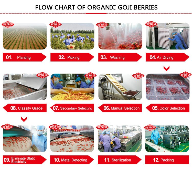 Goji berries goji berries benefits goji berry cultivation