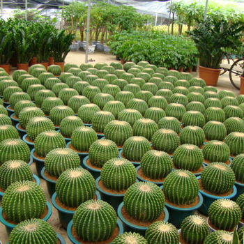 All Variety Cactus Plant Buy Outdoor Cactus Plants All Types Of