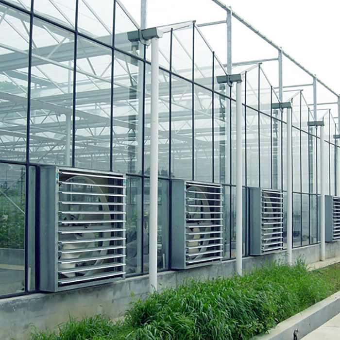New design Vegetable Fruits Flowers green house venlo greenhouse for agricultural
