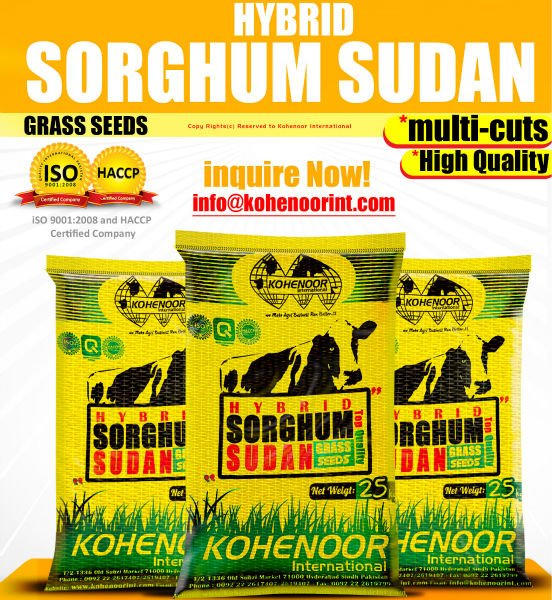 Multi-cuts Sorghum Seed