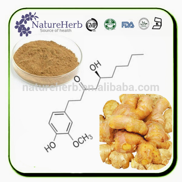 Factory directly sell 6-gingerol