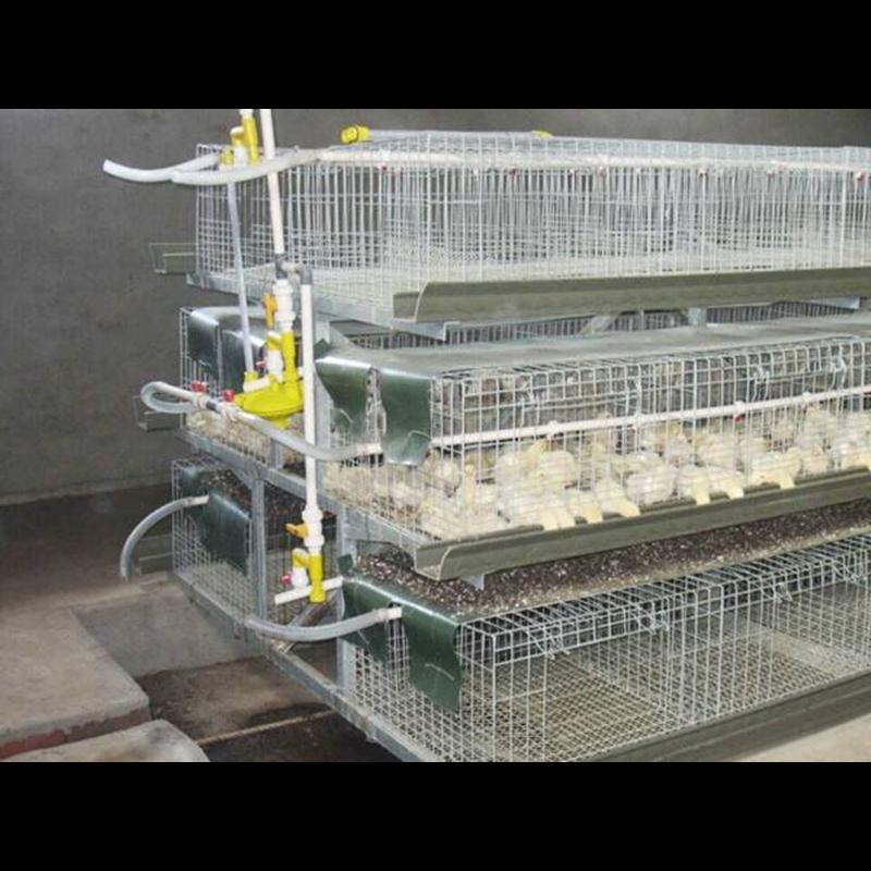 das de edad creciente jaula de pollos de engorde