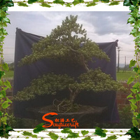 Chinese bonsai types of large outdoor artificial trees pine artificial bonsai tree