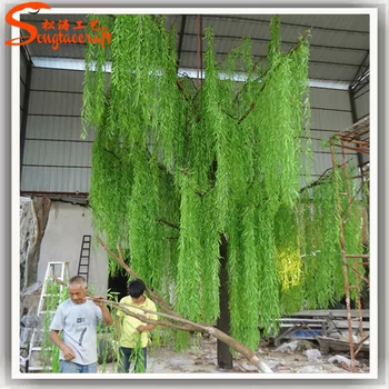 gambar tumbuhan eucalyptus - gambar gambar tumbuhan