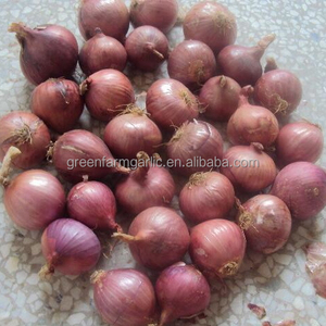 nasik onion red onion seeds price