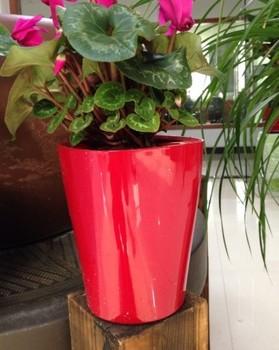 Mini red garden potssmart plant pot for flowersmall plastic pots mini red garden pots smart plant pot for flowersmall plastic pots workwithnaturefo