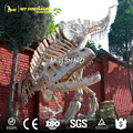MY DINO-DSS028 T Rex Skeleton Replica for Sale