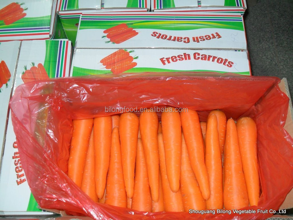 Fresh Carrots from new crop of china origin