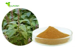 USP Standard Weight Loss 100% Pure Natural Coleus Forskohlii Extract Powder