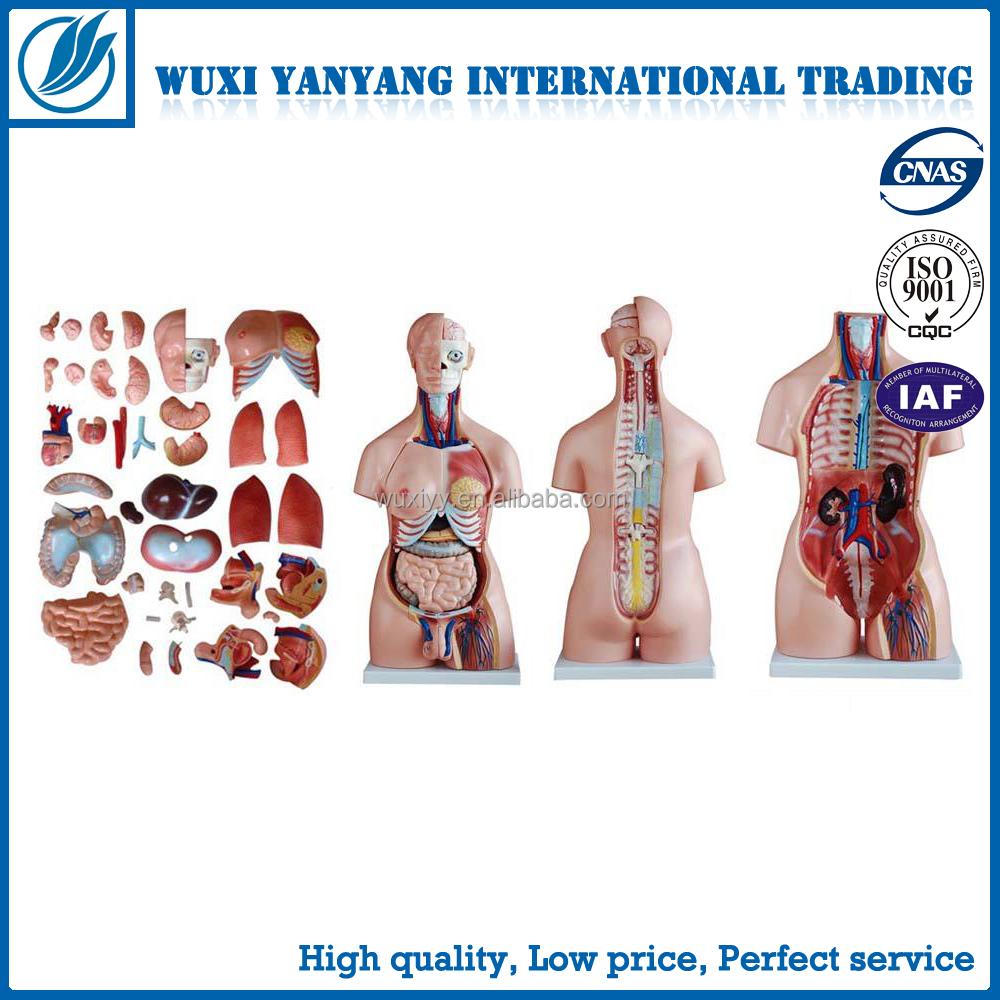 Venta al por mayor los órganos del cuerpo humano-Compre online los ...