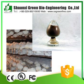 Organic Lion's Mane Mushroom Extract / Hericium Erinaceus Extract