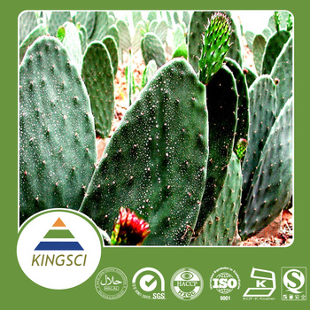 Free Sample Hoodia Gordonii Extract Hoodia Cactus Extract Powder
