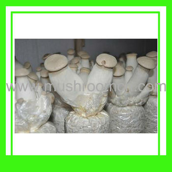 Organic Pleurotus Eryngii Cultivation Compost With Nop,Usda