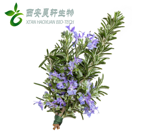 Organic dried Rosemary leaves powder extract rosmarinic acid